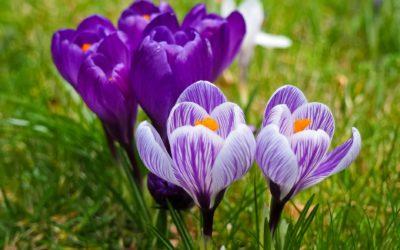 Pensioenblog #4 Het is lente in pensioenland!